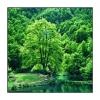 """""""Vert !"""", lac de Bethmale (Ariège)"""